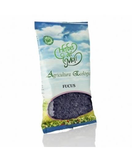 Fucus Planta Eco