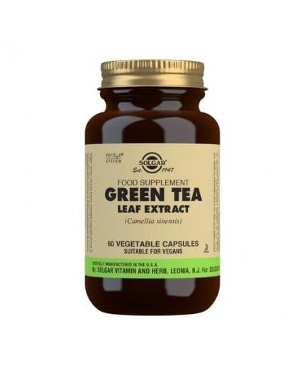 Té Verde Extracto de Hoja (Camellia sinensis)